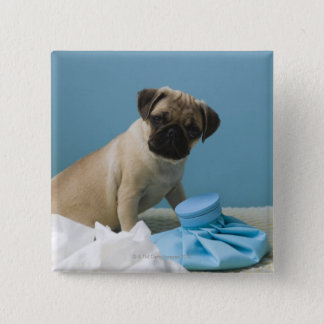 Pug dog sitting on bed by hot water bottle and 15 cm square badge