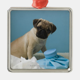 Pug dog sitting on bed by hot water bottle and christmas ornament