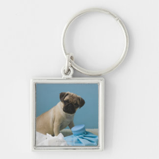 Pug dog sitting on bed by hot water bottle and key ring