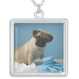 Pug dog sitting on bed by hot water bottle and silver plated necklace
