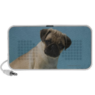 Pug dog sitting on bed by hot water bottle and mini speaker