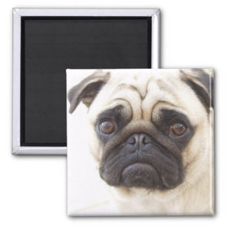 Pug Dog Square Magnet
