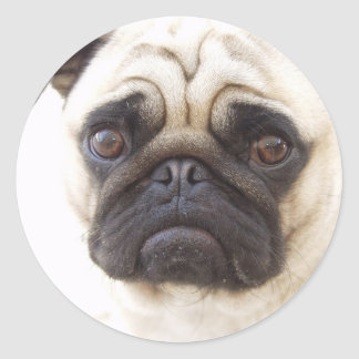 Pug Dog Sticker  Classic Round Sticker