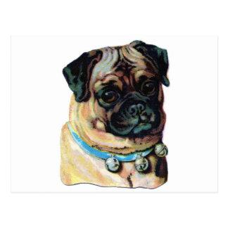 Pug Dog Vintage Postcard