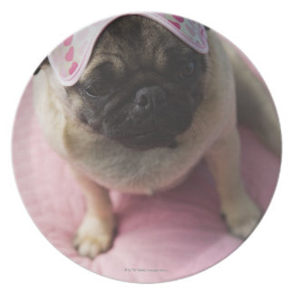 Pug dog with eye mask on head sitting on bed, party plate