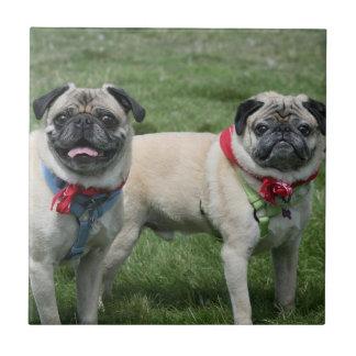 Pug dogs ceramic tile