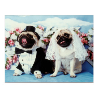 Pug Dogs Wedding Postcard