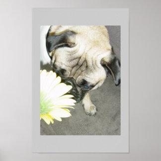 Pug flower power poster