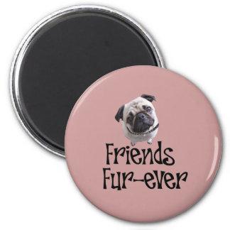 "Pug ""Friends Fur more ever "" 6 Cm Round Magnet"