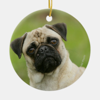 Pug Head Cocked Looking at Camera Christmas Ornament