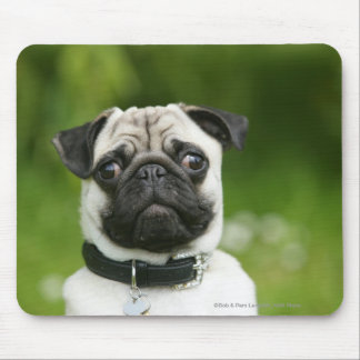 Pug headshot mouse pad