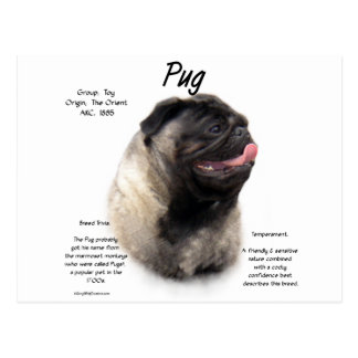 Pug History Design Post Card