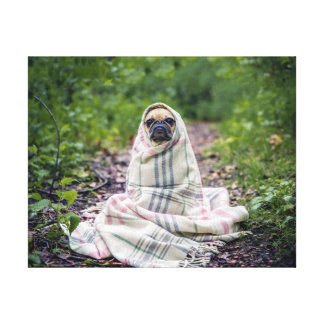 Pug in a Blanket Canvas Print