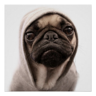 Pug In A Hoodie Poster