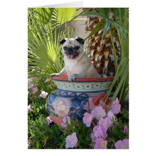 Pug in a Jug Greeting Cards