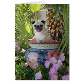 Pug in a Jug Note Card
