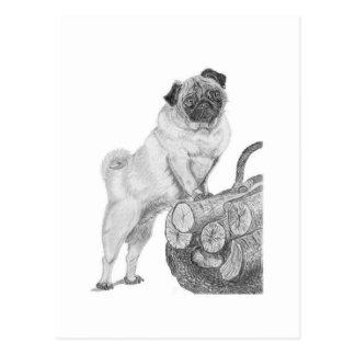 Pug in Black & White Postcard