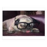 Pug In Glasses Postcard