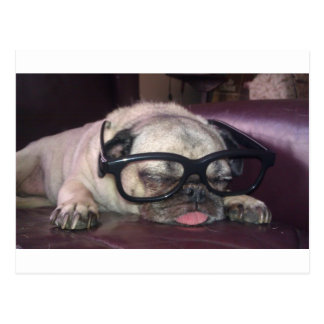 Pug In Glasses Postcard