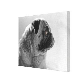 Pug in Profile Canvas Prints