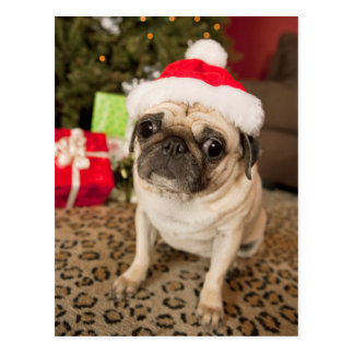 Pug in Santa Claus Hat sitting on carpet Postcard