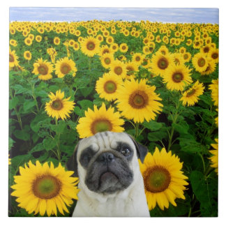 Pug in sunflowers tile