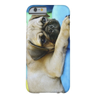 Pug laying on pillows barely there iPhone 6 case