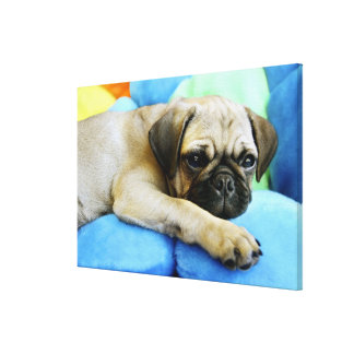 Pug laying on pillows canvas print
