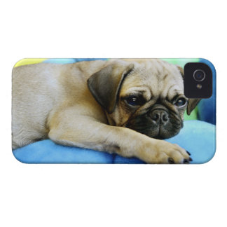 Pug laying on pillows iPhone 4 cases