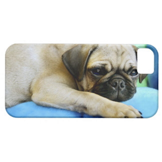 Pug laying on pillows iPhone 5 covers