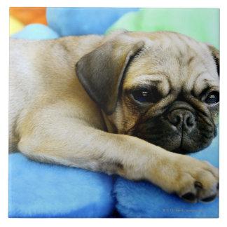 Pug laying on pillows tile