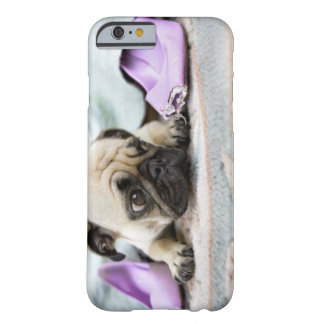 Pug looking innocent after chewing the toe off barely there iPhone 6 case