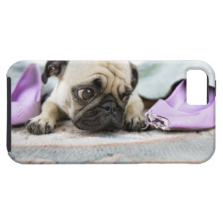 Pug looking innocent after chewing the toe off case for the iPhone 5