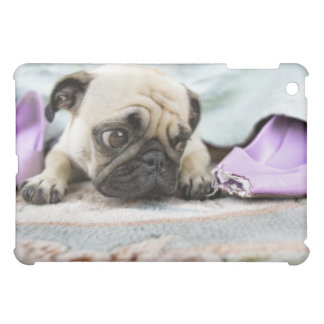 Pug looking innocent after chewing the toe off iPad mini cover