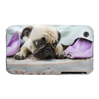 Pug looking innocent after chewing the toe off iPhone 3 Case-Mate case