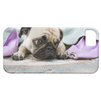 Pug looking innocent after chewing the toe off iPhone 5 cover