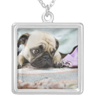 Pug looking innocent after chewing the toe off silver plated necklace