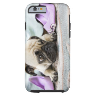 Pug looking innocent after chewing the toe off tough iPhone 6 case