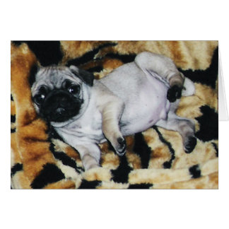 Pug Muffin Valentine s Day Greeting Card