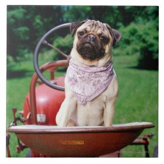 Pug on lawnmower wearing bandana tile
