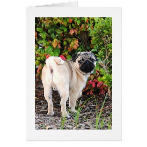 Pug Photo Card