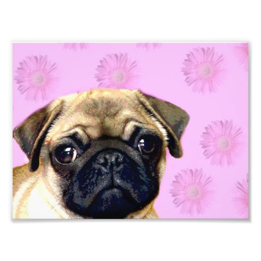 Pug photo print