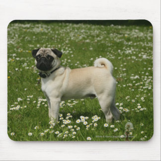 Pug Playing in Flowers Mouse Pad
