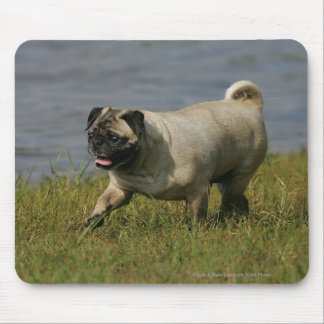 Pug Playing Near Water Mouse Pad