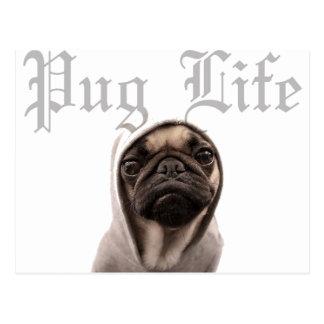 Pug Postcard