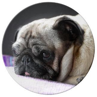 Pug pug Carlin ~ photo Jean Louis Glineur Plate