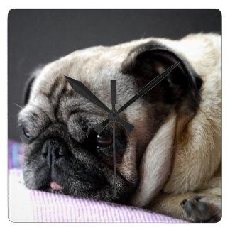 Pug pug Carlin ~ photo Jean Louis Glineur Square Wall Clock