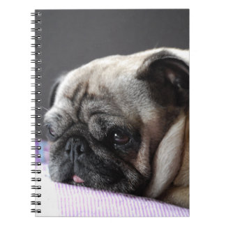 PUG PUG - photo: Jean Louis Glineur Notebook