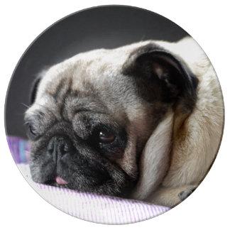 Pug Pug ~ photo Jean Louis Glineur Porcelain Plates