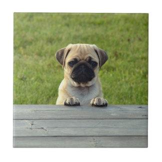 Pug Pup Tile